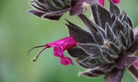 Native Plants: the Genius of Their Place