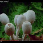 Fantastic Fungi: The Spirit of Good (Video)