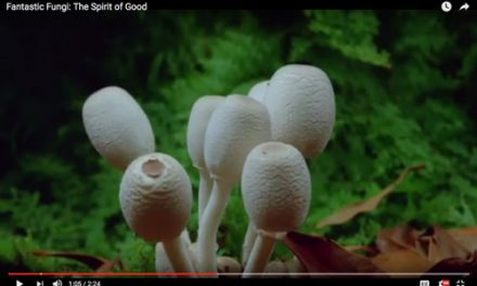 Fantastic Fungi: The Spirit of Good (Video)