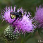 Treasuring bees, saving the world