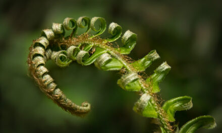 The survivors: the long consolation of ferns