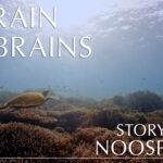 A Brain of Brains
